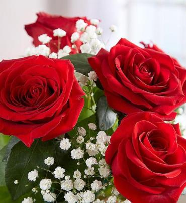 Love\'s Embrace Roses