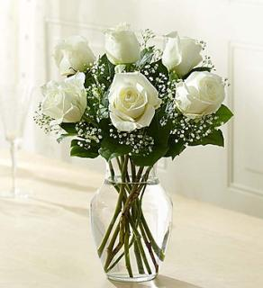 Love\'s Embrace  White Roses